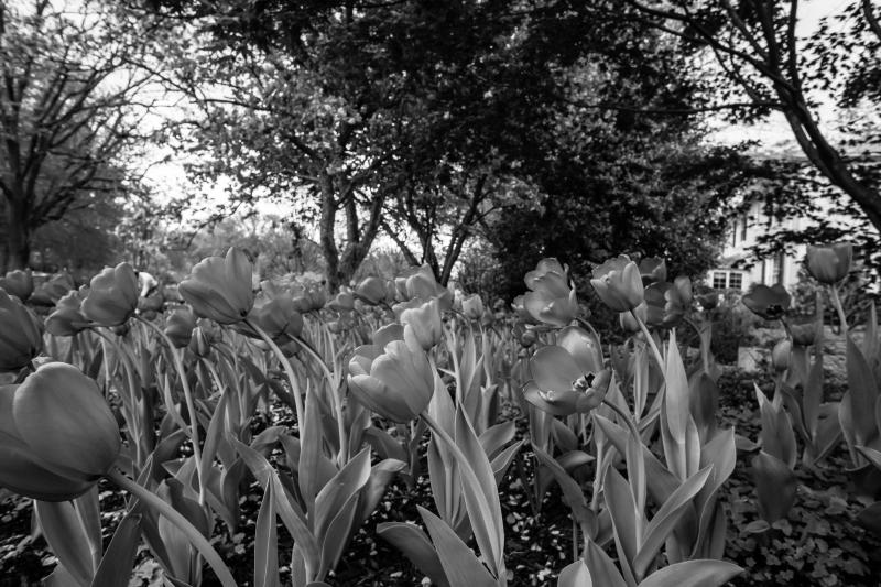 Plants-07157-2